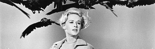 Die Vögel – Horror-Klassiker von Alfred Hitchcock erfährt Neuauflage durch die BBC