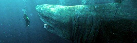 The Meg – Teil 2 gesichert? Urzeit-Mega-Hai startet weltweit deutlich über den Erwartungen